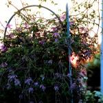 Auringonlaskun aikaan/ Pirjo Lampinen