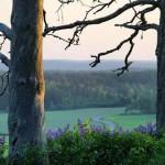 Hakoisten linnavuoren kevät/ Tero Kekki