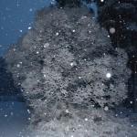 Joulupuu/ Nina Linnakylä