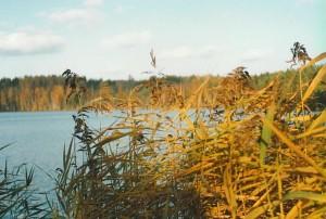 Lastujärveltä syksyllä