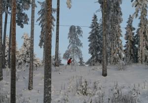 hiihtäjä Konttilan ladulla012010