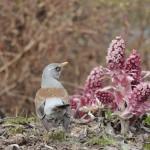 Kukka ja lintu/ Kaisu Lindsten