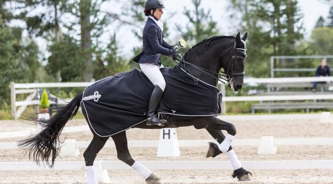 Maneesi on piste tavoitteellisen hevosharrastuksen päälle