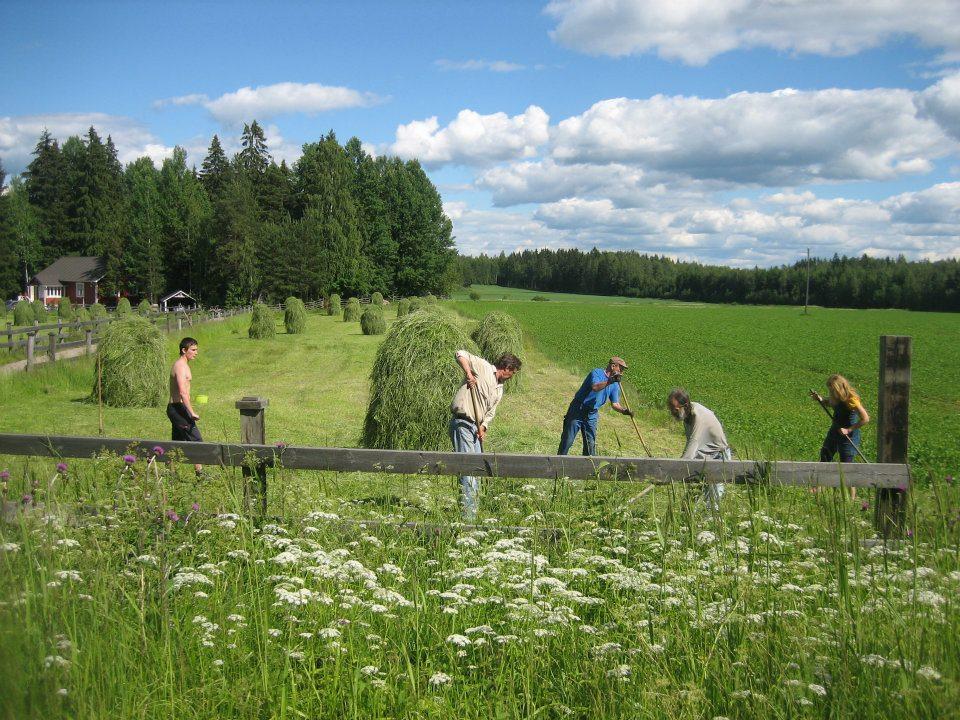 Mirja Schmidt Eräästä heinäpeltopäivästä Kelhän kylästä noin viiden vuoden takaa