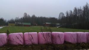 Elisa Karpalo Pinkit Paalit Nämä paalit kaunistivat syysmaisemaa Iittalan Kutilan kylässä 2016