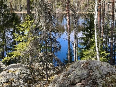 jäkäläisiä kiviä, puita ja takana erämaajärvi